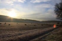 Farmland on a frosty morning