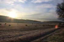 Farmland on a frosty morning