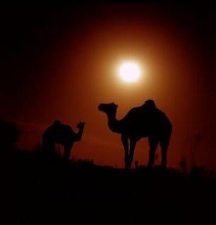 Camel Navigation