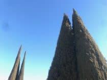 a triangular shaped tree in Madrid