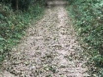 A track with mud and leaves after an equinoctial gale