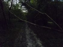 Fallen tree across a path