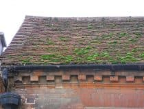 Green moss on Chichester roof
