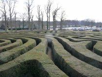 a photo of a hedge maze