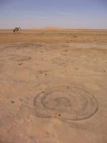 Fossil in Libyan Sahara