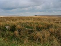 grasses at dartmoor