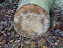 a log cut down