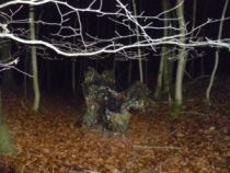 tree stump on a night walk
