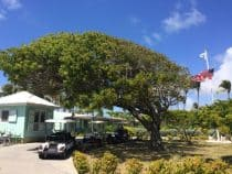 Photo of a tree which has been effected by Prevailing winds in barbuda