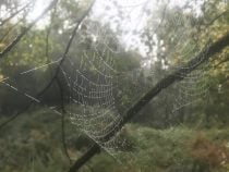 A spiders web covered in dew