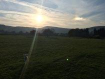 A lamb in the sunshine