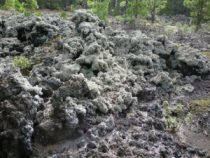 Lichen growing