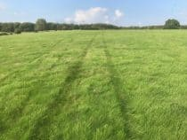 Vehicle tracks in grass
