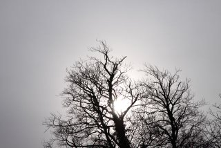 Winter tree with no leaves