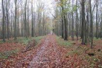 Woods near Eartham