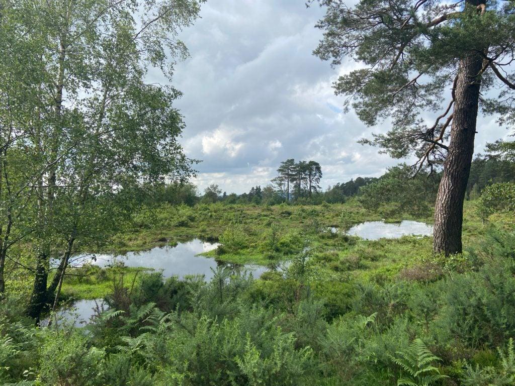 boggy landscape